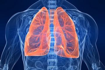 płuca oddech